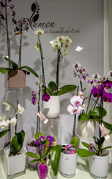blumen und zimmerpflanzen helfen ihnen, den stress abzubauen, Garten und Bauten